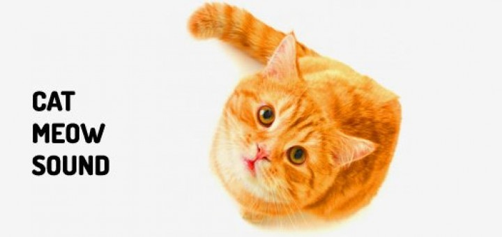 Cat Meow Sound Free Download MP3 Orange Free Sounds