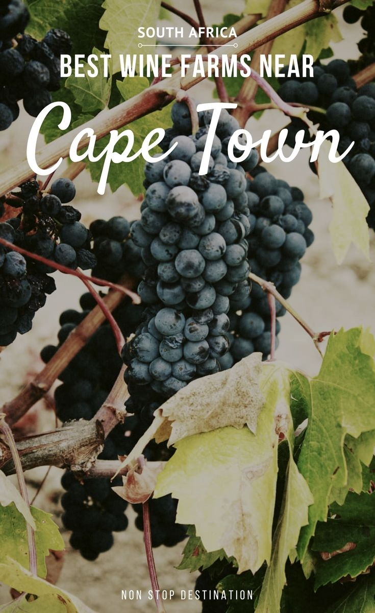 My favourite wine farms near Cape Town Cape town, Meal