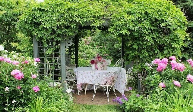 Rosa Päonien Pergola Kletterpflanzen Weinlaube Kaffeetisch ... Pergola Bepflanzen Kletterpflanzen