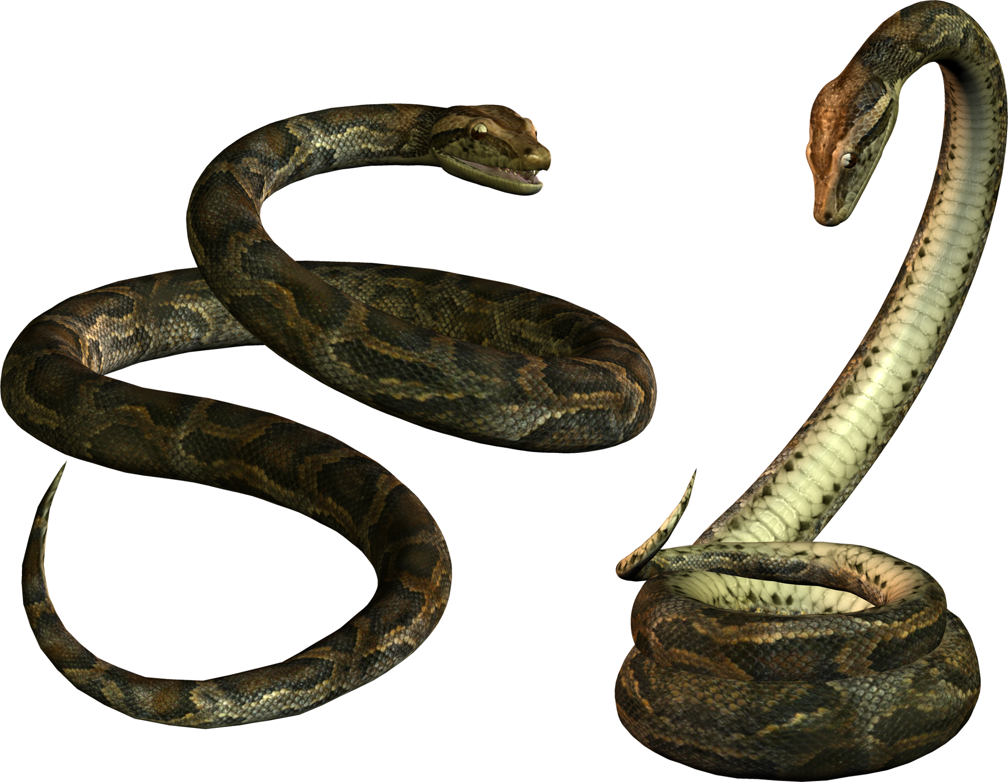 snake png image picture download free reptil pinterest