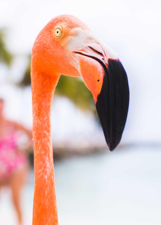 flamingo // jessakae