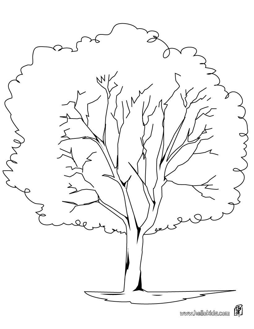 Plane Tree Coloring Page Do You Like TREE Pages Can Print Out This Pagev Or Color It Online With Our Machine