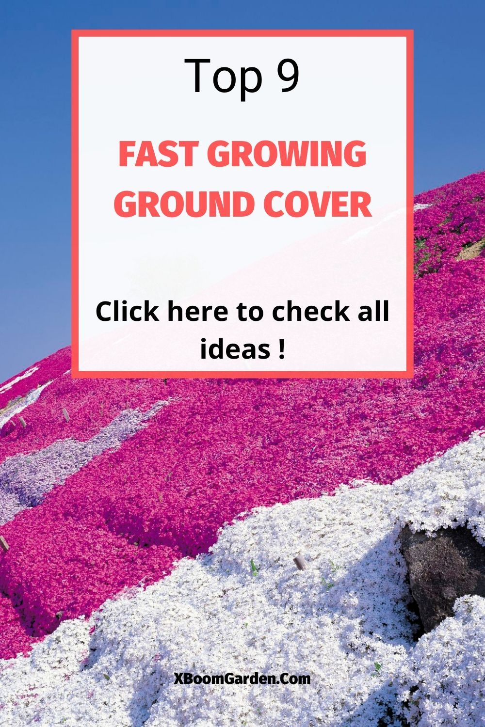 Top 9 Fast Growing Ground Cover For Slopes In 2020 Ground Cover Ground Cover Flowers Ground Cover Plants