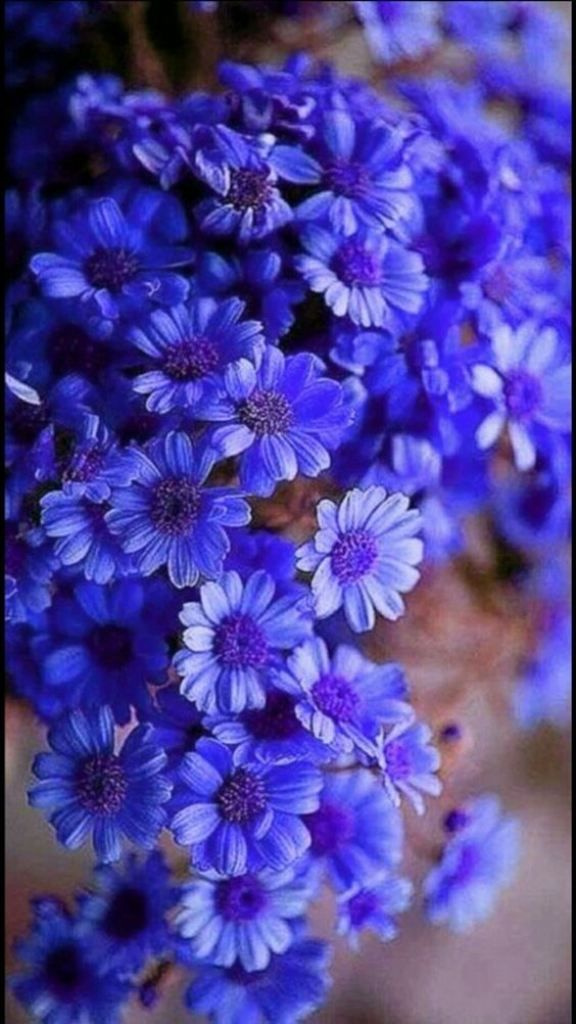 Пин от пользователя Shady *** на доске Flowers | Красивые ...  Фруктовый Сад Обои