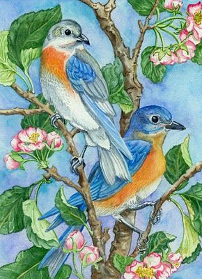 Peggy Turchette 365 Birds: January 2011