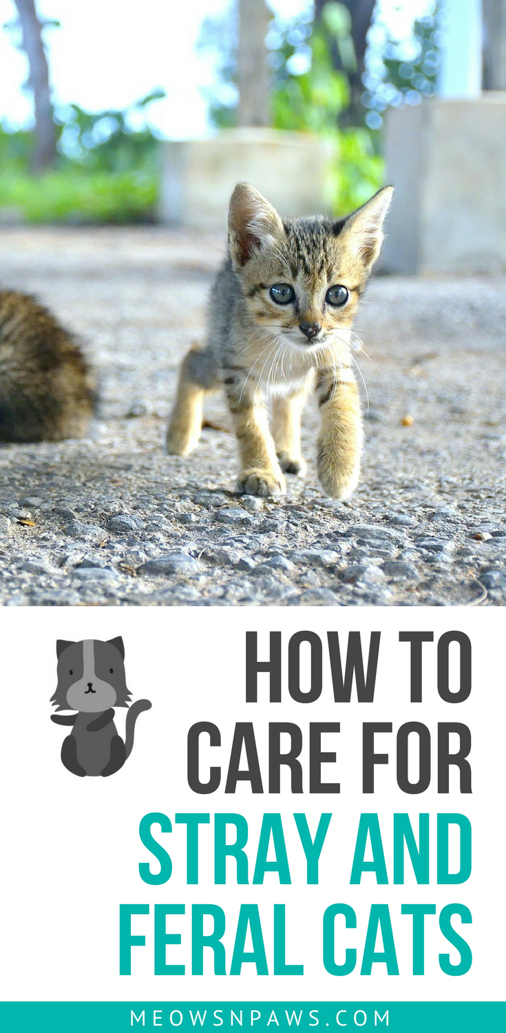 How To Care For Stray And Feral Cats 6 Things To Know Meows N Paws Cats Feral Cats Pregnant Cat