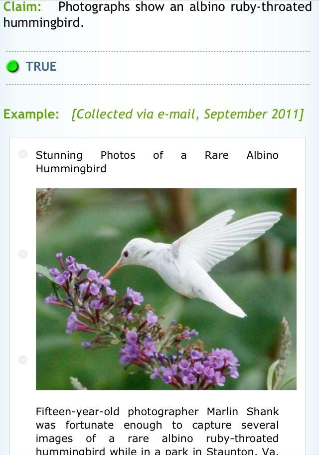 http://www.snopes.com/photos/animals/albinohummingbird.asp
