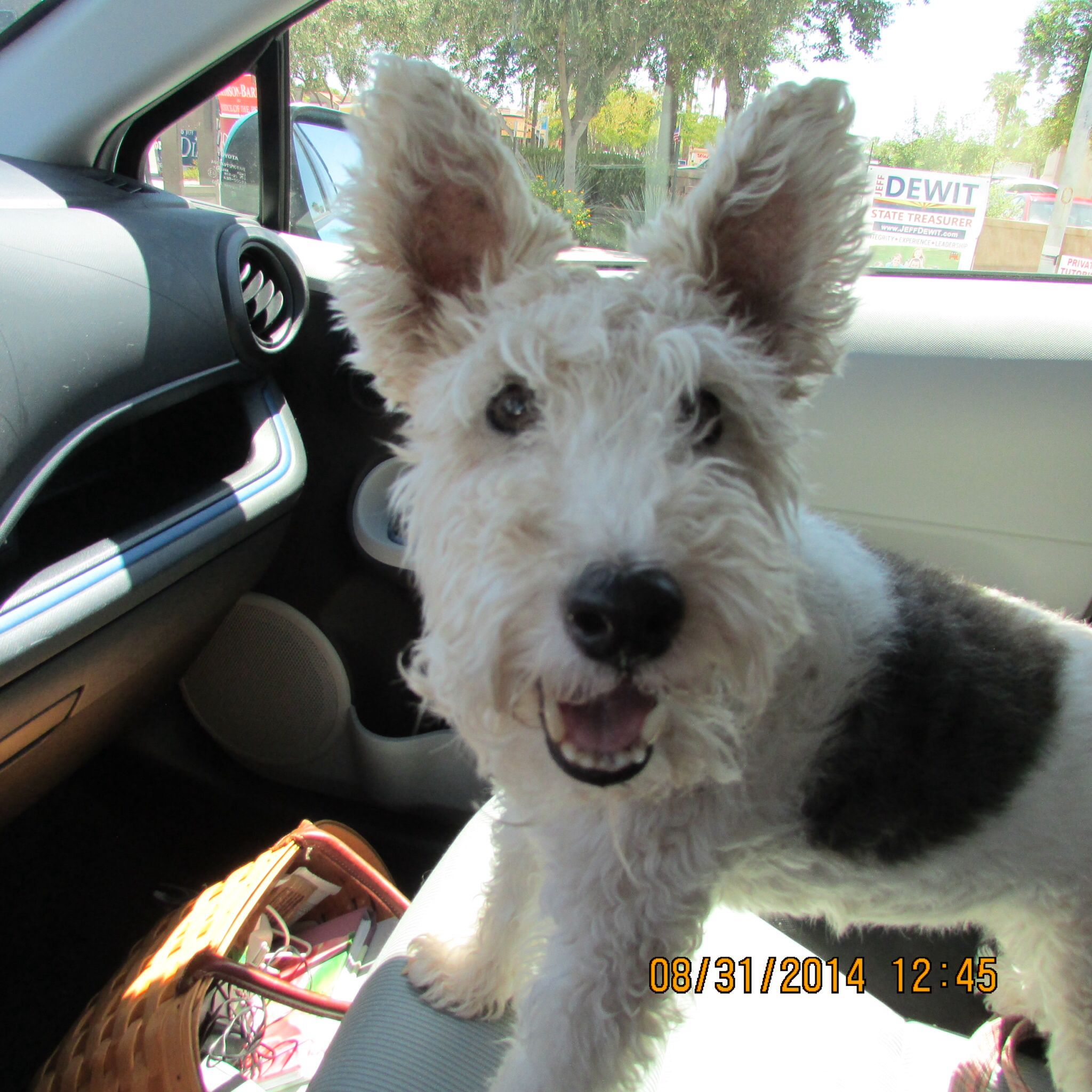 ◔◡◔) Emma Rose sharing her wire fox terrier happiness ...