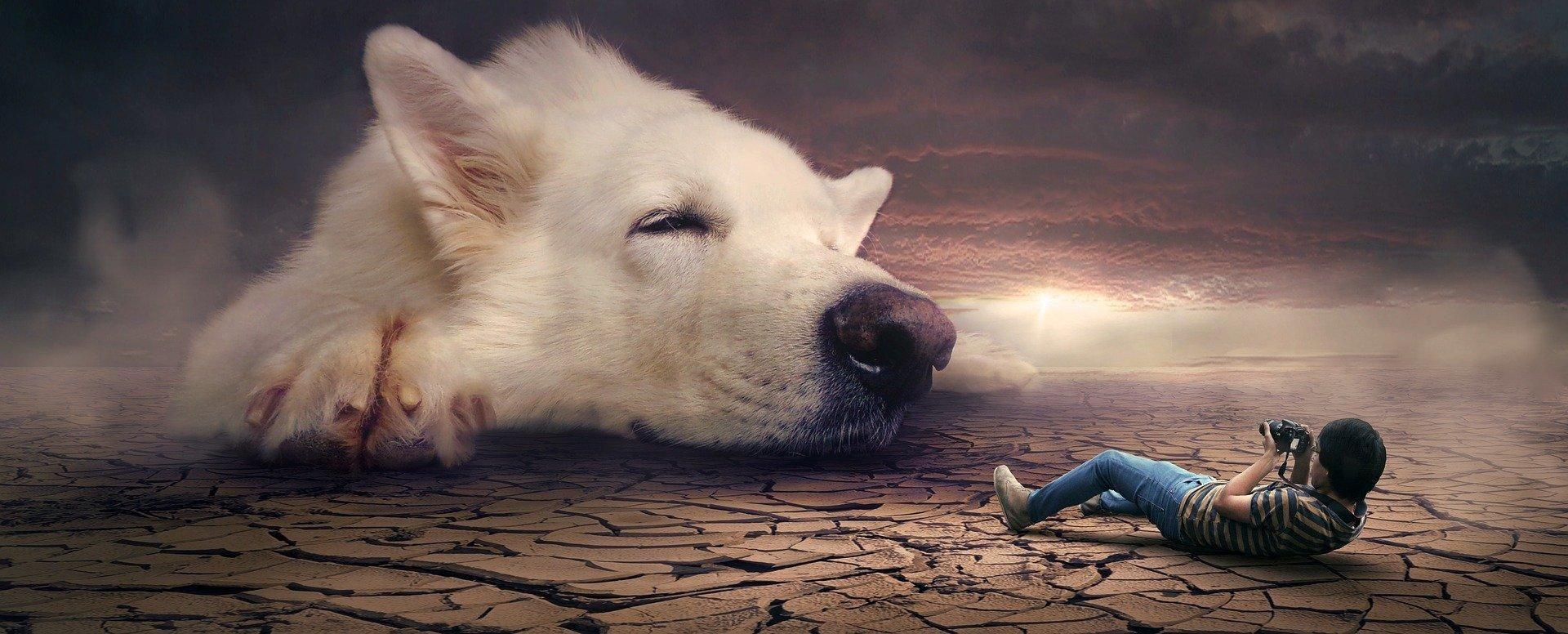 تبحثون في غوغل عن تفسير الكلاب في الحلم تفسير رؤية الكلاب تلاحقني في المنام مطاردة الكلاب في المنام رؤية الكلاب في المنام للع En 2020 Photo Chien Chien Chien Enfant