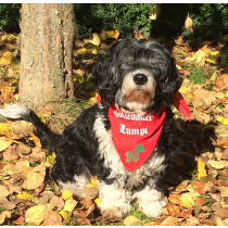 Hundetuch mit verschiedenen bayerischen Aufdrucken