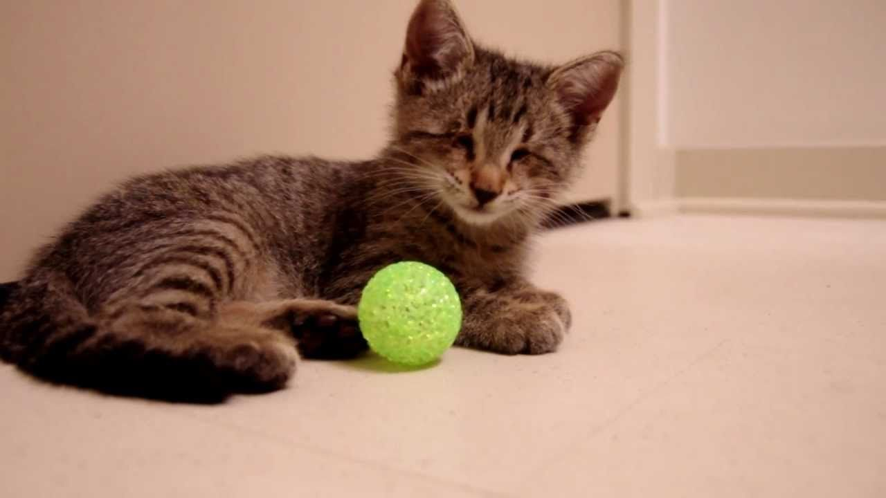 Oskar The Blind Kitten And His First Toys The Animal Rescue Site Blog Kittens Playing Kitten Cats
