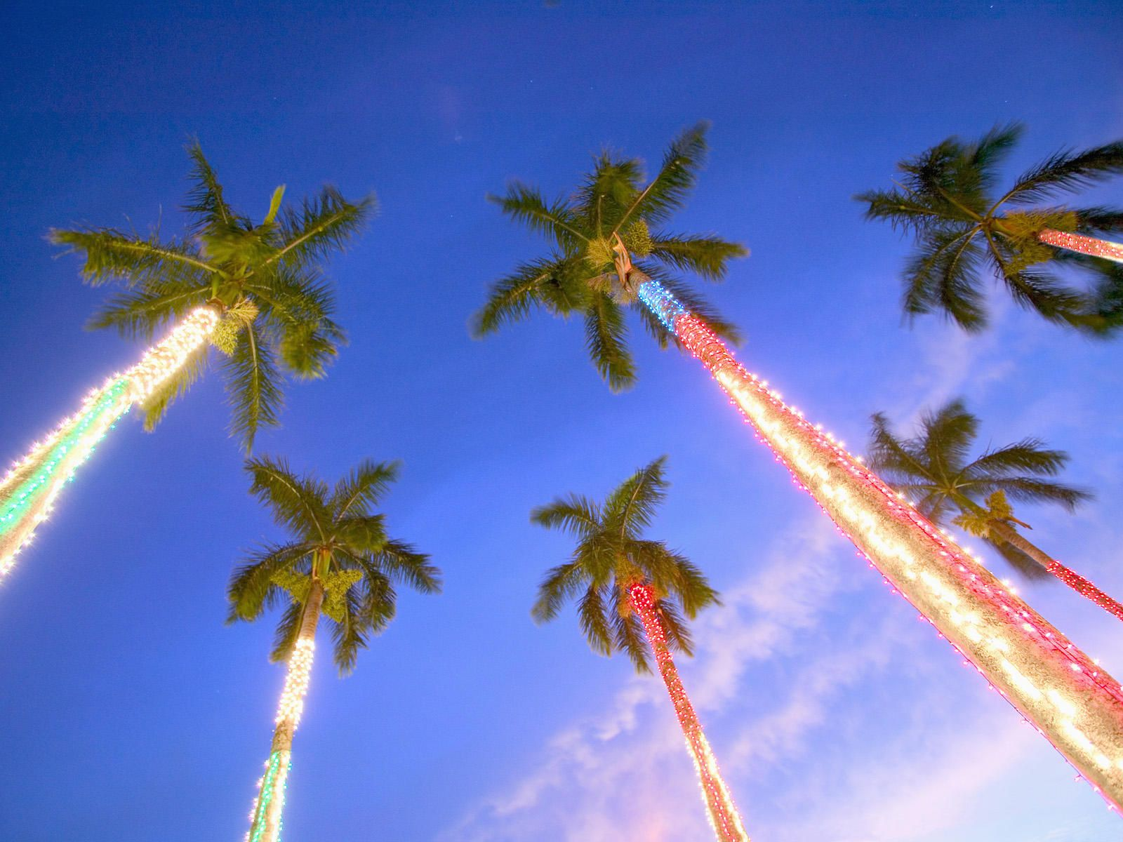 Christmas Palms Hawaii Wallpapers And Stock Photos Beach Christmas Beach Wallpaper Hawaii Christmas