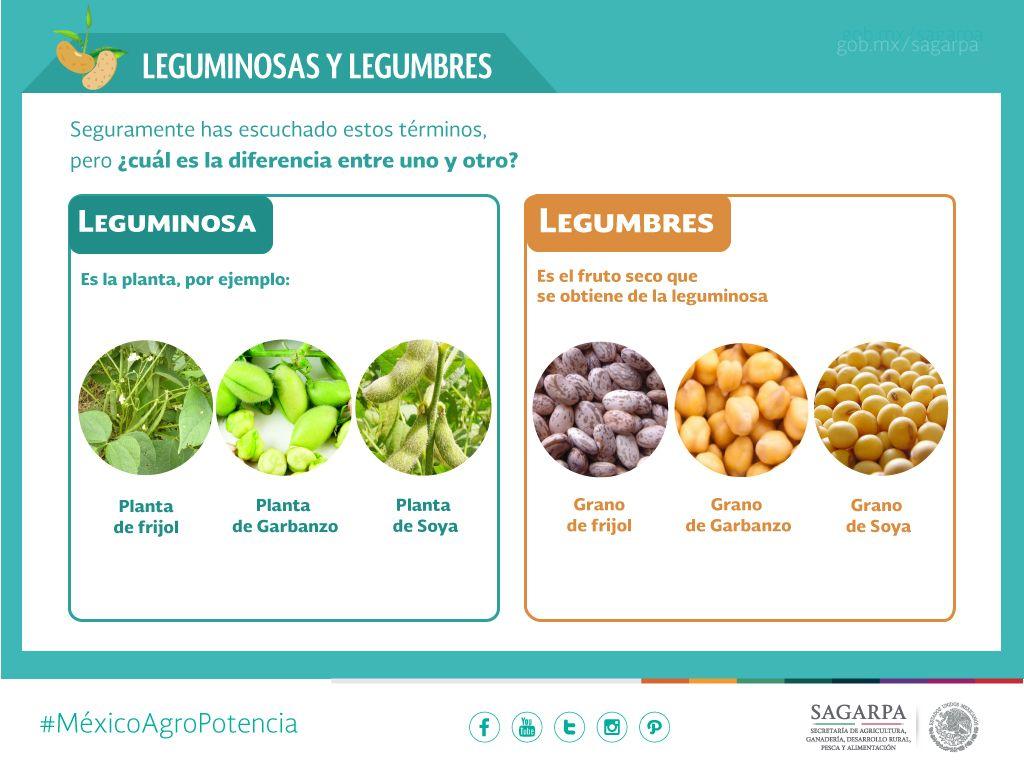 LEGUMBRES Y LEGUMINOSAS PDF DOWNLOAD