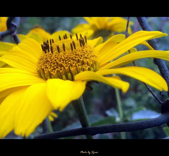 szusi Elmúlt.... című képe az Indafotón. a href=http://indafoto.hu/szusi/bibe_parade rel=externalhttp://indafoto.hu/szusi/bibe_parade/a