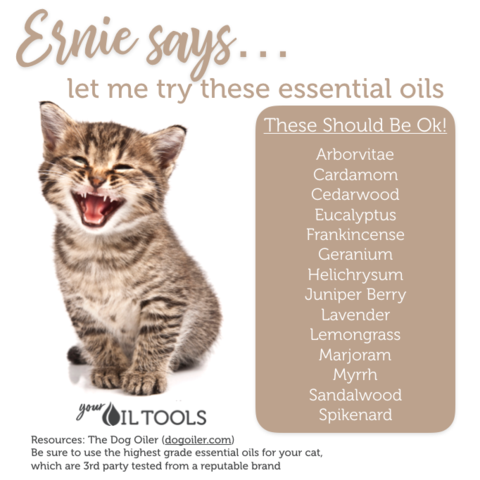 Essential Oils for Cats (With images) Calming essential