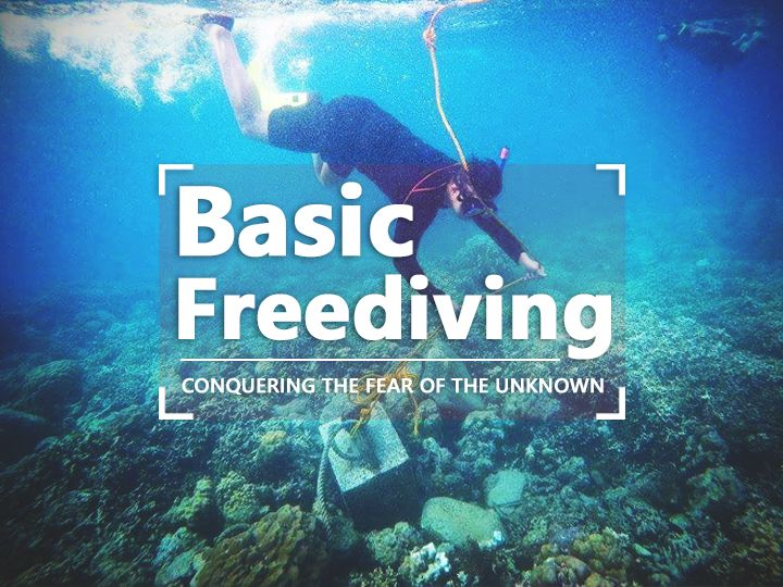 Freedive Ph Learn The Basics Of Freediving In Manila Fear Of The Unknown Trip Wanderlust Travel