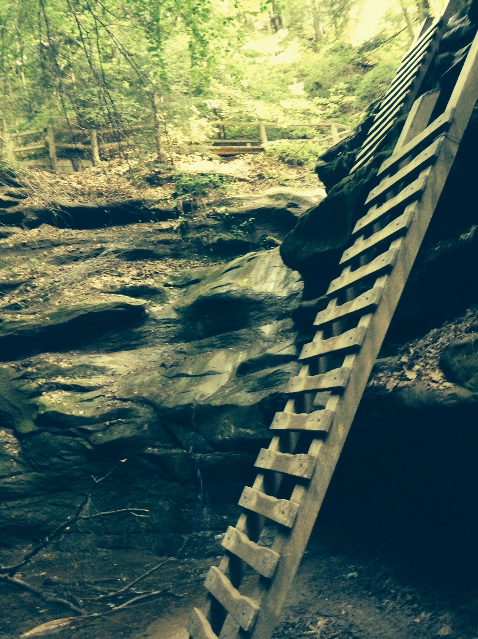 The ladders at Trail 3 at Turkey Run State Park in Indiana (May, 2014)