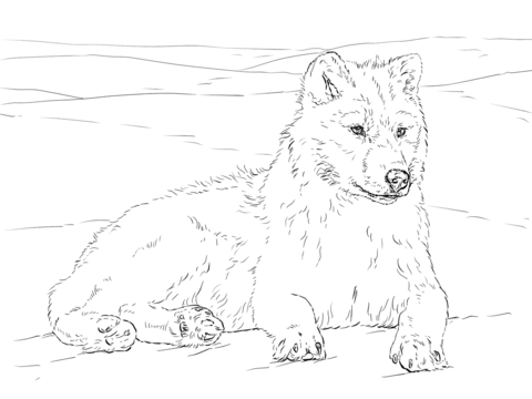 Arctic Wolf Coloring Page Puppy Coloring Pages Dog Coloring Page Cat Coloring Page