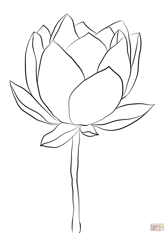 Lotus Flower Coloring Page Free Printable Coloring Pages Lotus Flower Art Flower Line Drawings Lotus Flower Drawing