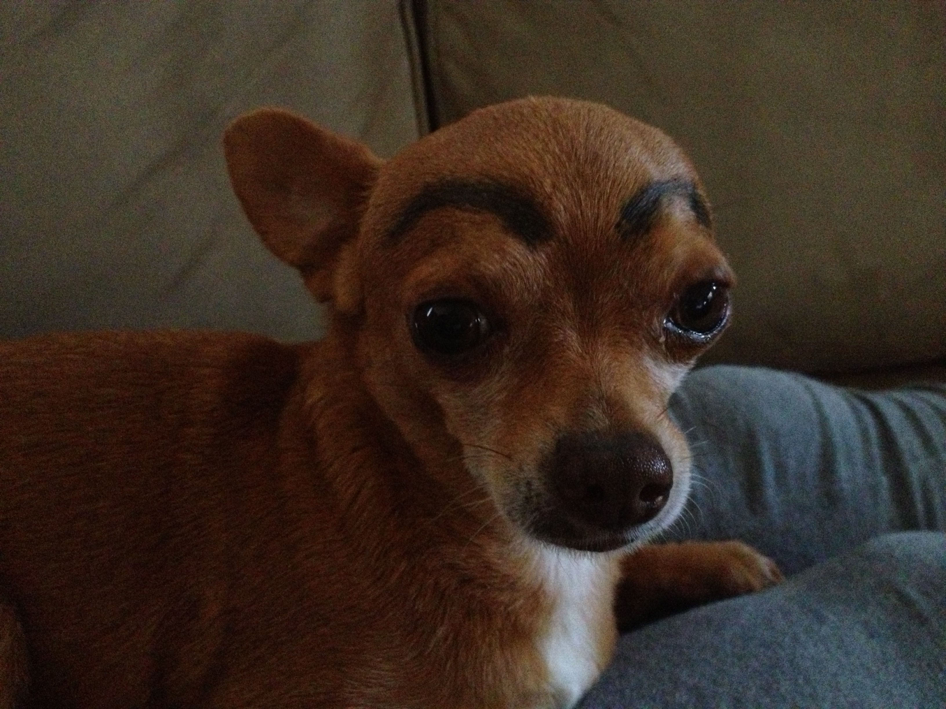 Cuidados Para Las Pestanas The Beauty Effect Memes De Perros Chihuahua Memes Divertidos Sobre Perros Memes Divertidos