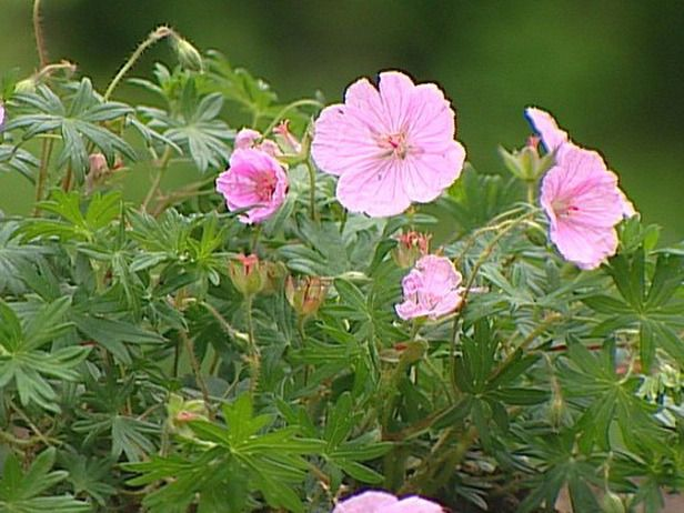 Low maintenance plants for easy landscaping pink flowers for Easy maintenance flowers and plants