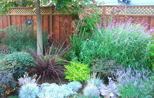 Water Wise Gardening Water Wise Gardening Water Wise Garden Plants South Af In 2020 Drought Tolerant Landscape Drought Tolerant Landscape Design Small Yard Landscaping