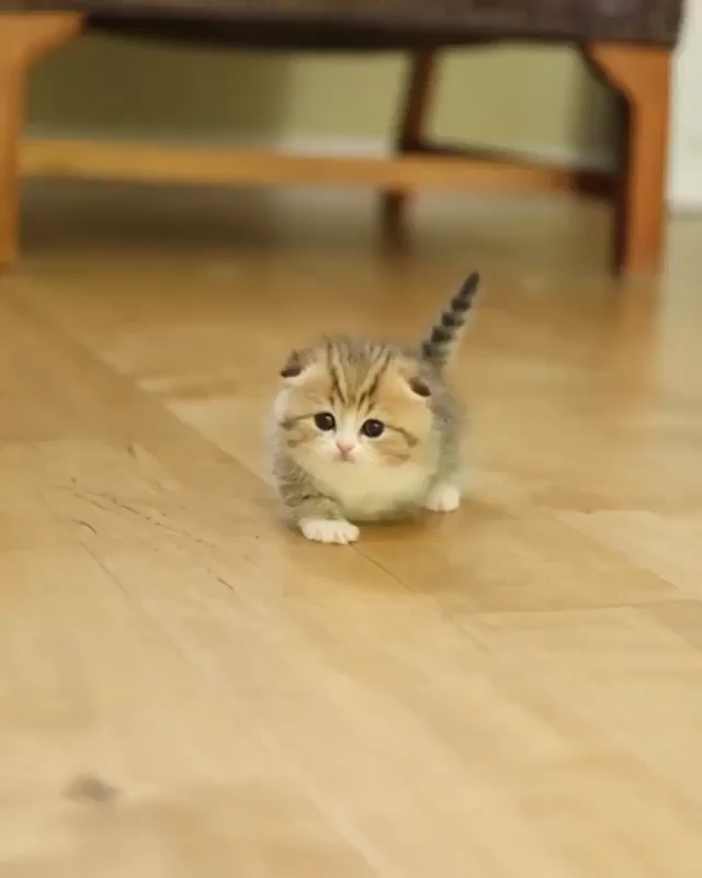 Photo of La verdad sobre los hábitos de este gatito aquí> – Uschi – La verdad sobre este gatito …