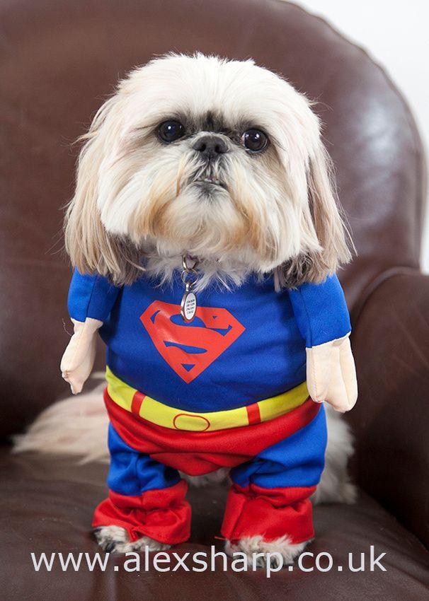 Superhero Dog Dogs Superhero Pet Photographer