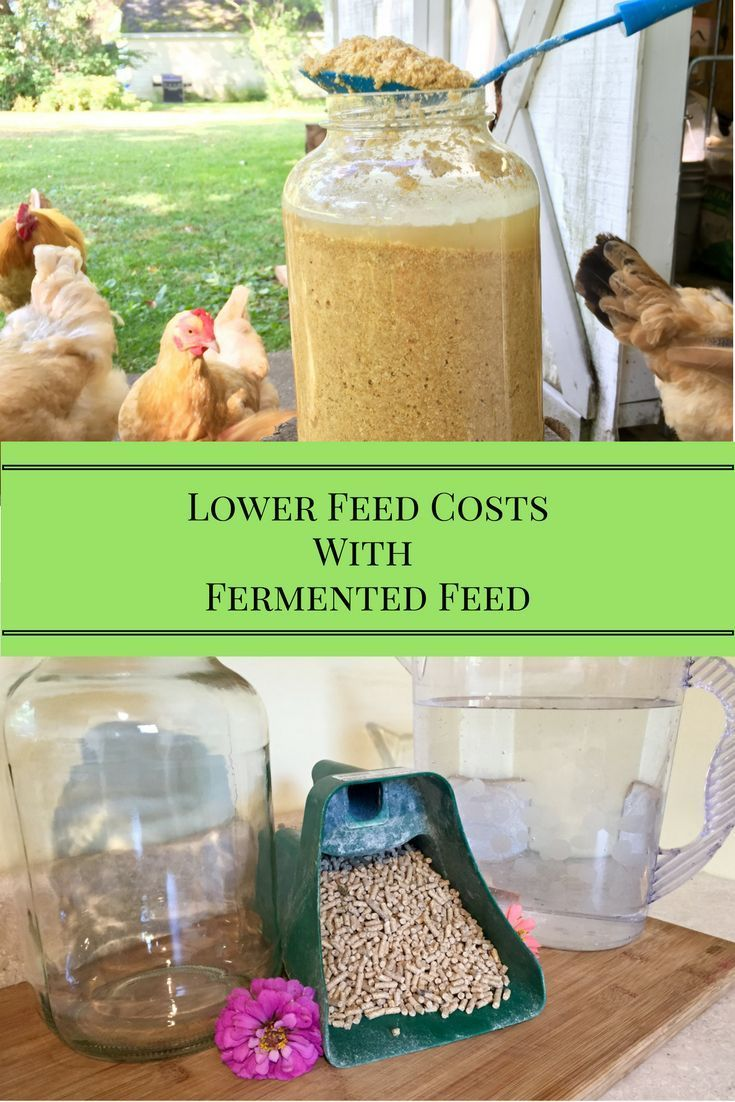 lower feed costs with fermented feed farm life pinterest