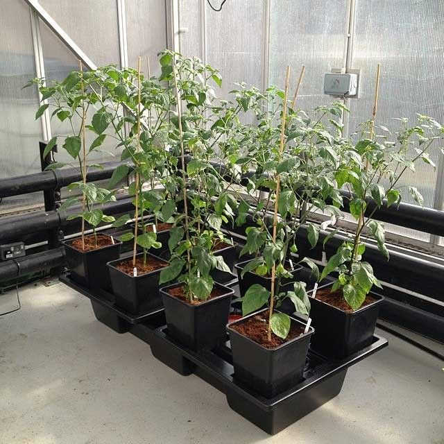 Wilma Systems - Media & Hydro Growing System | Growell Hydroponics