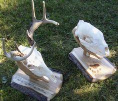 Springbrook Laser Engraving - Hunting ~ Deer, Elk, & Mule ...