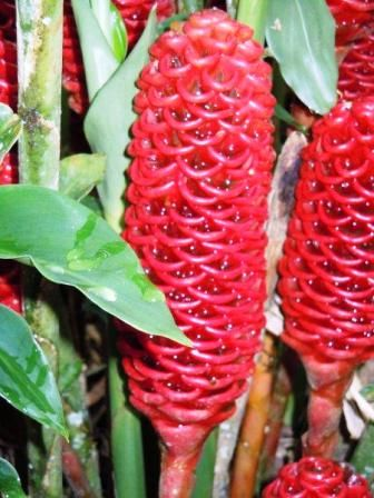 You Find The Most Exotic Plants And Flowers In Jungle Ecuador Retire
