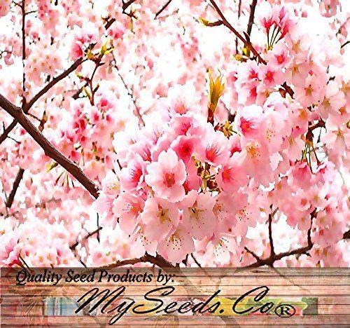Bubble Wrap Print Cherry Blossom Tree W Free Printable Tree Seeds Cherry Blossom Tree Japanese Cherry Tree