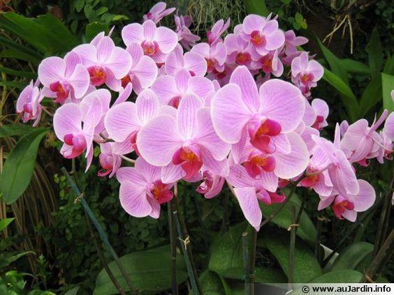 comment faire refleurir une orchid e flores. Black Bedroom Furniture Sets. Home Design Ideas