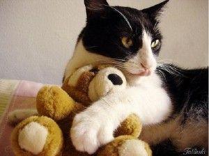 Tuxedo Cat Stuffed Animal Dengan Gambar