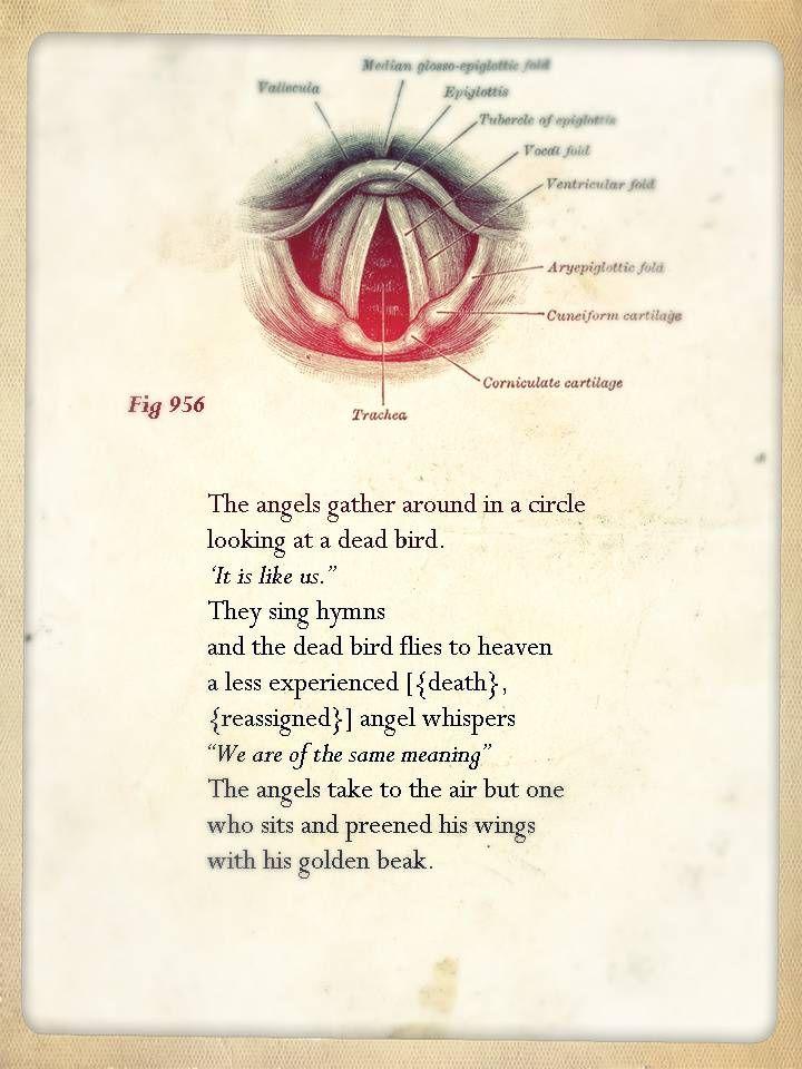 anatomy poems | The Anatomy Theatre | Pinterest | Anatomy