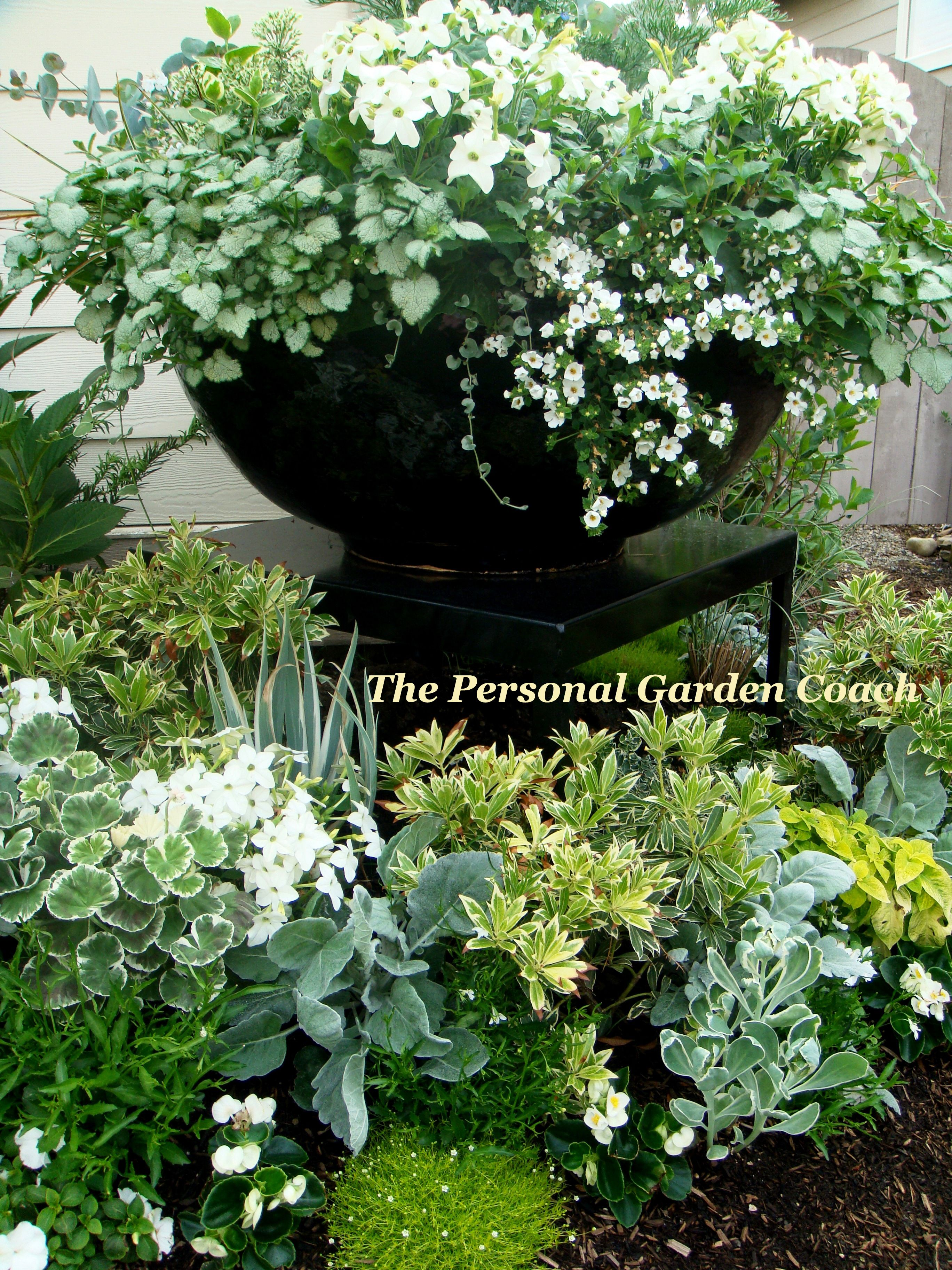 silver and white white flower containers garden. Black Bedroom Furniture Sets. Home Design Ideas
