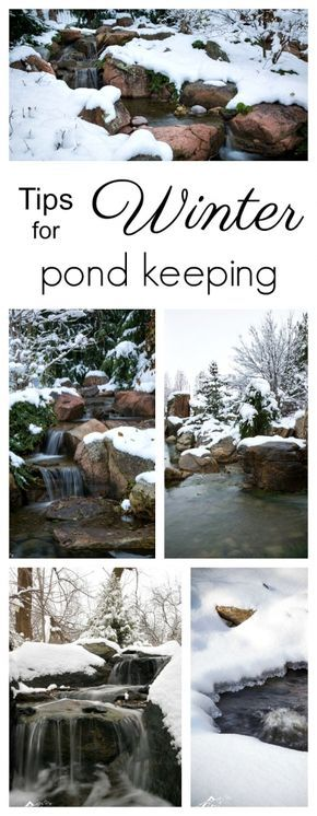Tips for Winter Pond Keeping