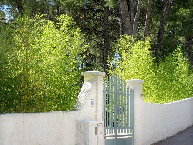 Vorzüge einer Bambushecke Bambushecke, Hecke, Im freien