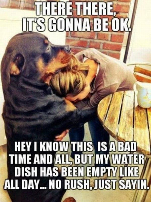 #dogs #humor #pettherapy #doghumor Majeski Law, LLC @ www.MajeskiLaw.com