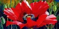 Poppy Patina by Jennifer Bowman
