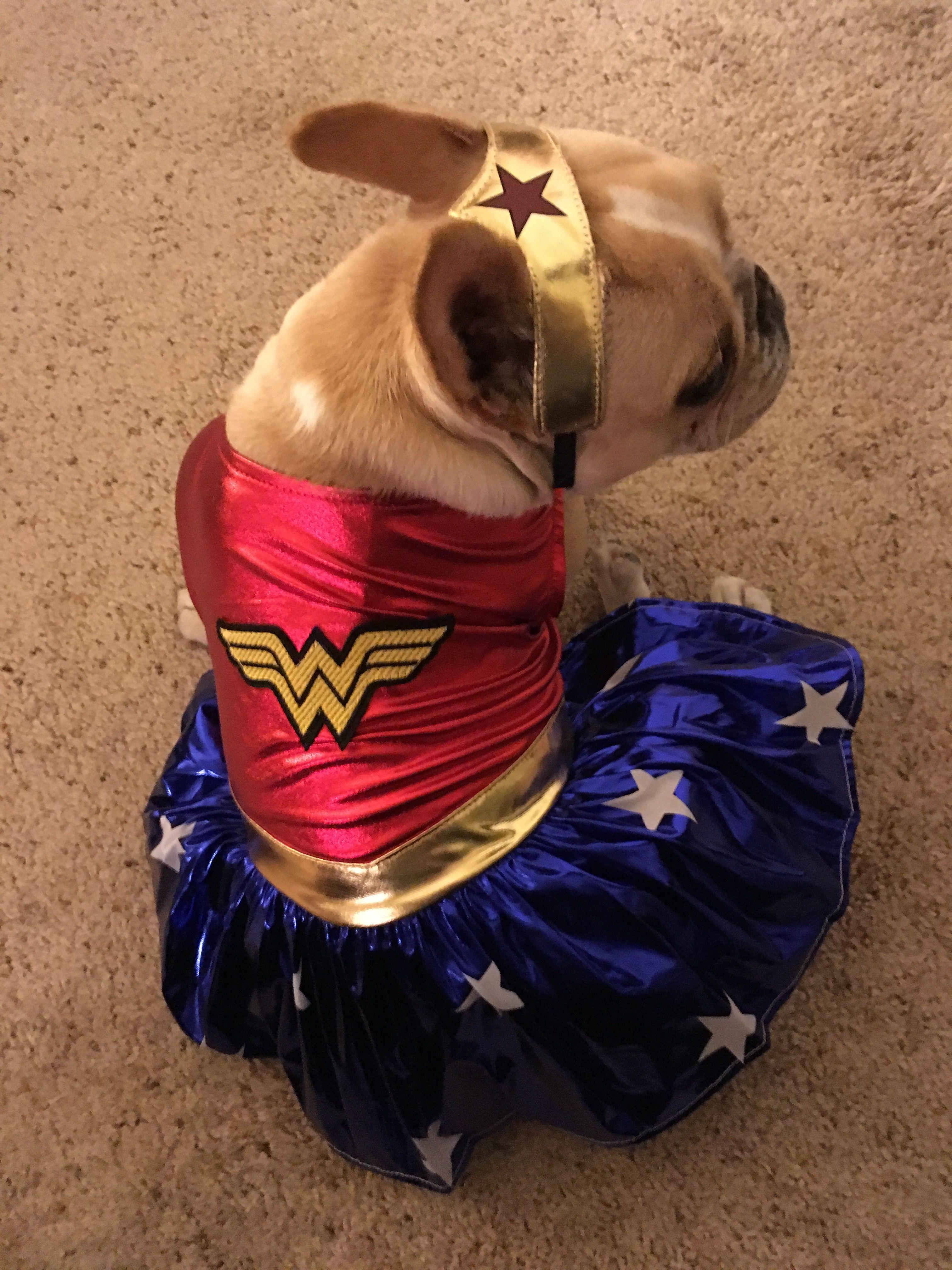 Wonder Woman Wonder Woman Costume French Bulldog Bulldog