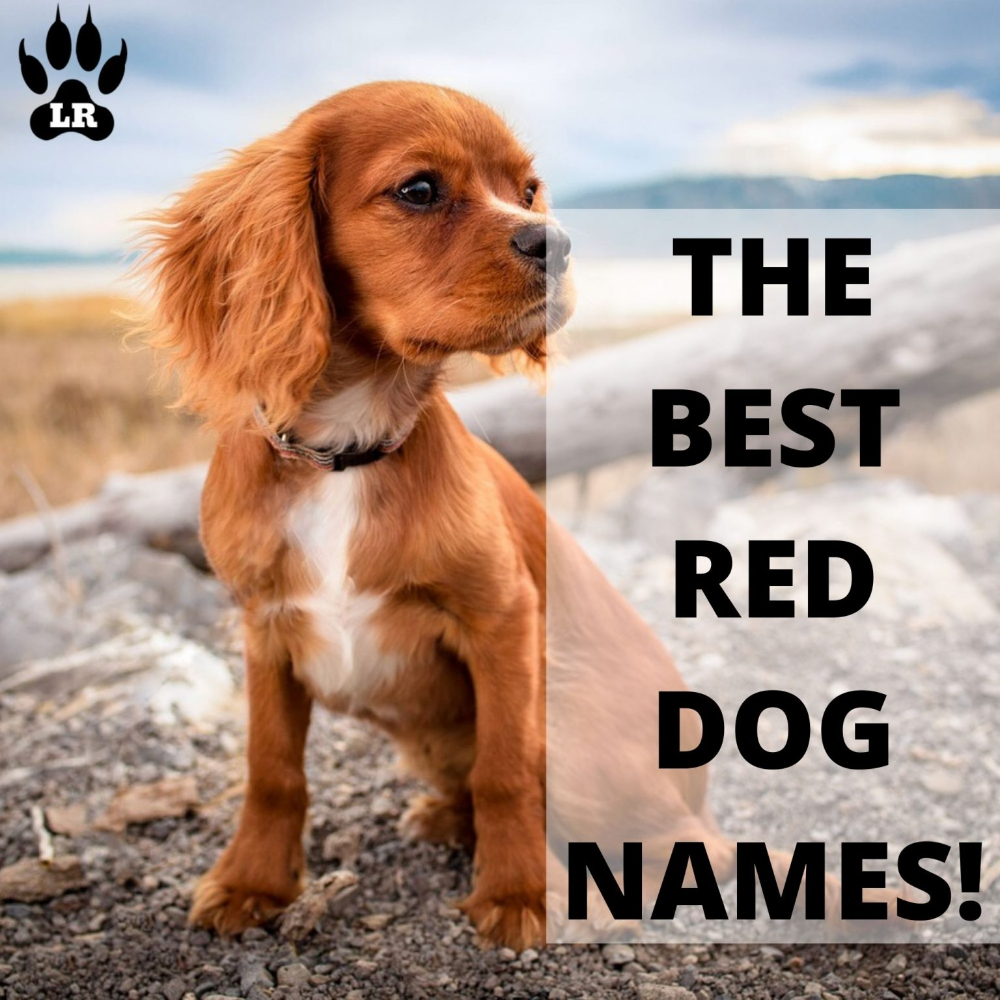 100 Of The Best Red Dog Names Labrottie Com In 2020 Dog Names Girl Dog Names Girl And Dog
