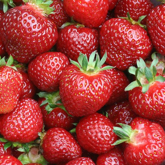 Albion Strawberry Plants Organic 20 Bare Root By Freshgardenliving Strawberry Berry Jam Strawberry Health Benefits