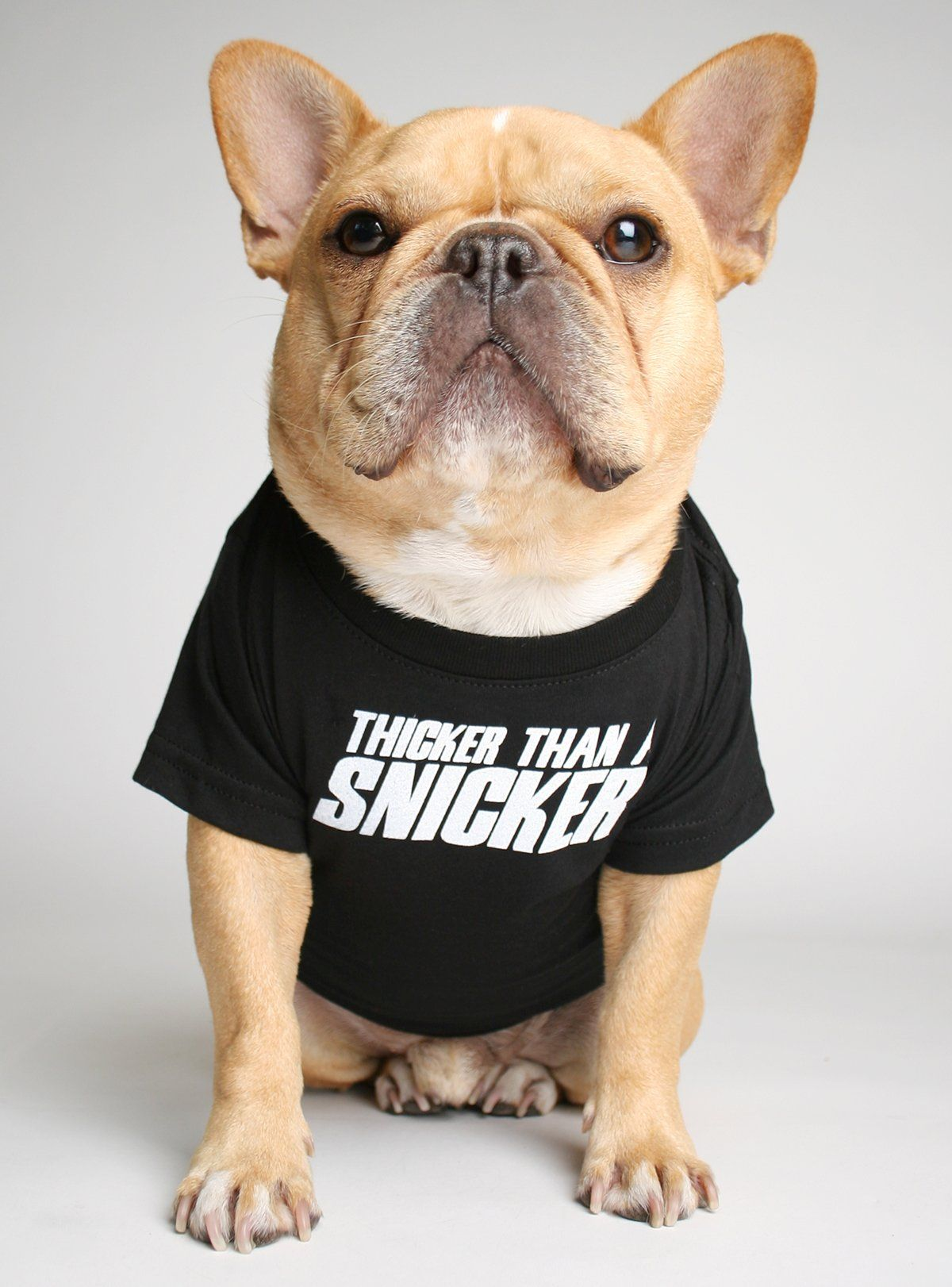Thicker Than A Snicker Dog Tee Dog Shirt Baby Dogs French