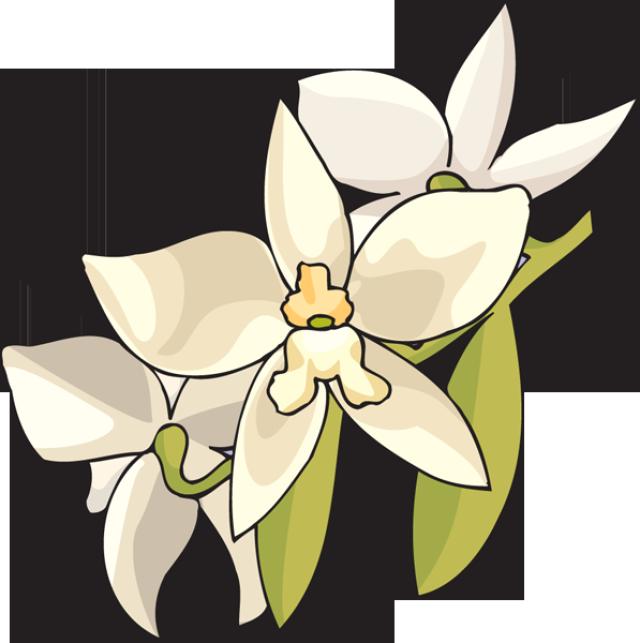 Web Development Flower Art Clip Art Flower Images