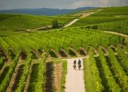 Rheinhessen . Vineyards as far as the eye can see cover Germany's largest wine region. Its wine growers are famous for their creativity.