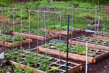 Tomato Garden Ideas vertical gardening tomatoes pumpkins How To Build A Square Foot Gardening Vegetabletomato Trellis Out Of Electrical Conduit And