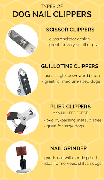 Best Dog Grooming Tools Supplies Your Essential Grooming Guide Dog Grooming Tools Grooming Tools Dog Grooming Salons