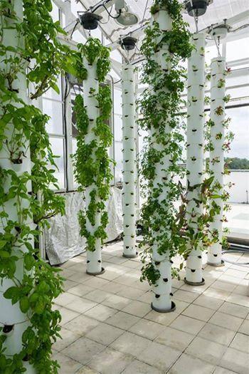 20 Rooftop Garden Ideas To Make Your World Better Bored Art Vertical Garden Hydroponic Gardening Urban Garden